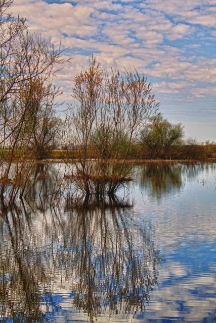 фирсово In 2019: Рыбалка в Алтайском крае, река Лосиха